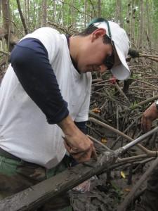 El trabajo con manglares es demandante física y mentalmente