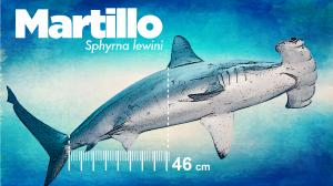 Martillo-01