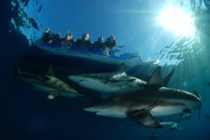 Los tiburones pueden ser una fuente de ingreso a través del ecoturismo. Foto por Sijmon de Waal