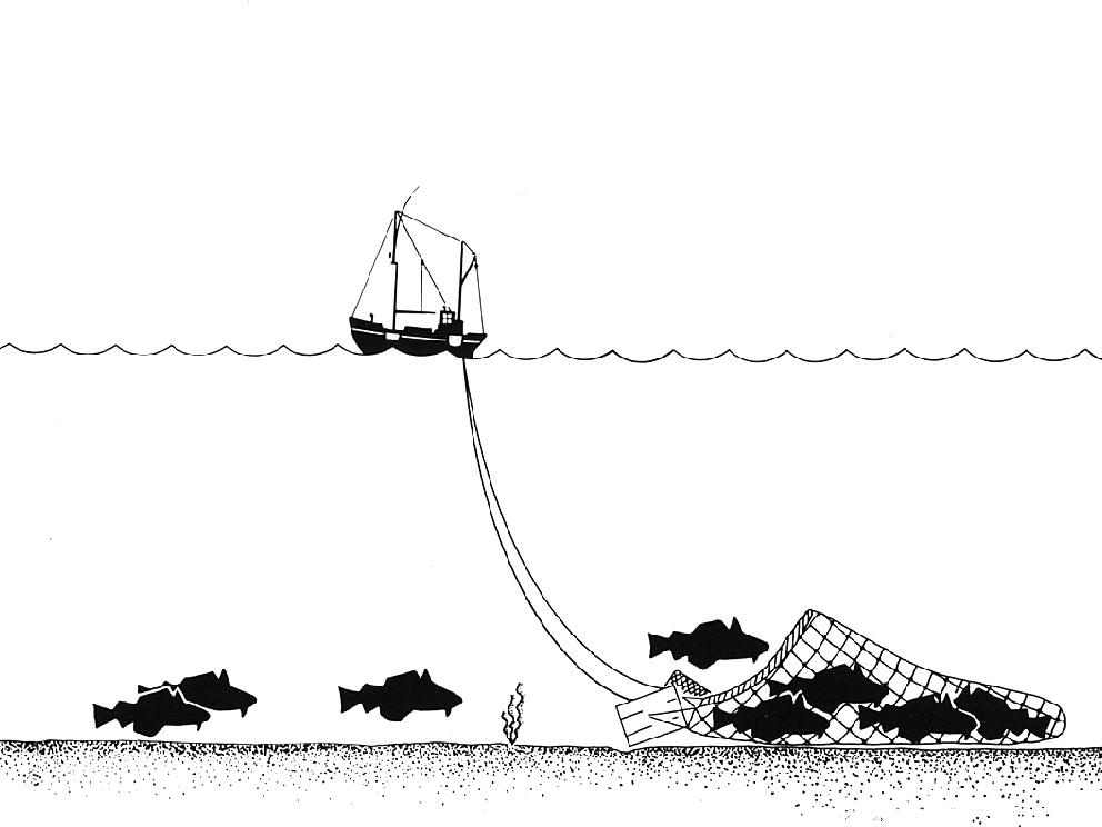 El arrastre es uno de las formas de pesca más destructivas. ©Wikimedia Commons