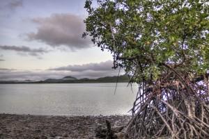 La conservación de manglares debe ser un tema prioritario
