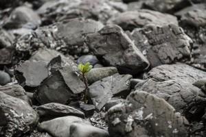El manglar puede adaptarse al aumento del nivel del mar, si ocurre lentamente.